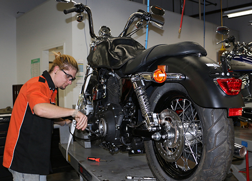 harley student